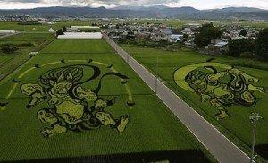 art et champs de riz dans divers rizcouleurs-diff-300x182